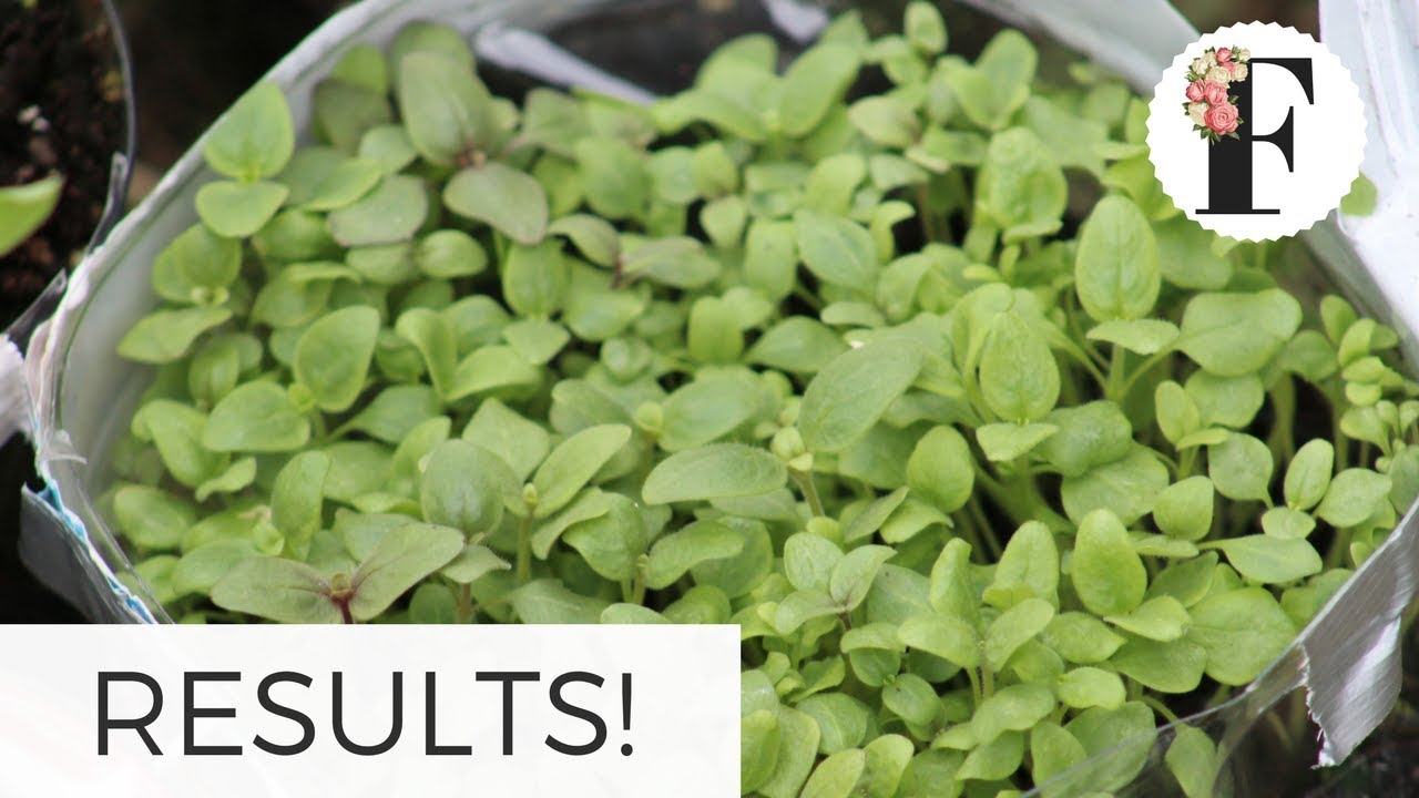 Winter Sowing RESULTS! Part 1 – Growing Flowers from Seed Gardening for Beginners Cut Flower Farm