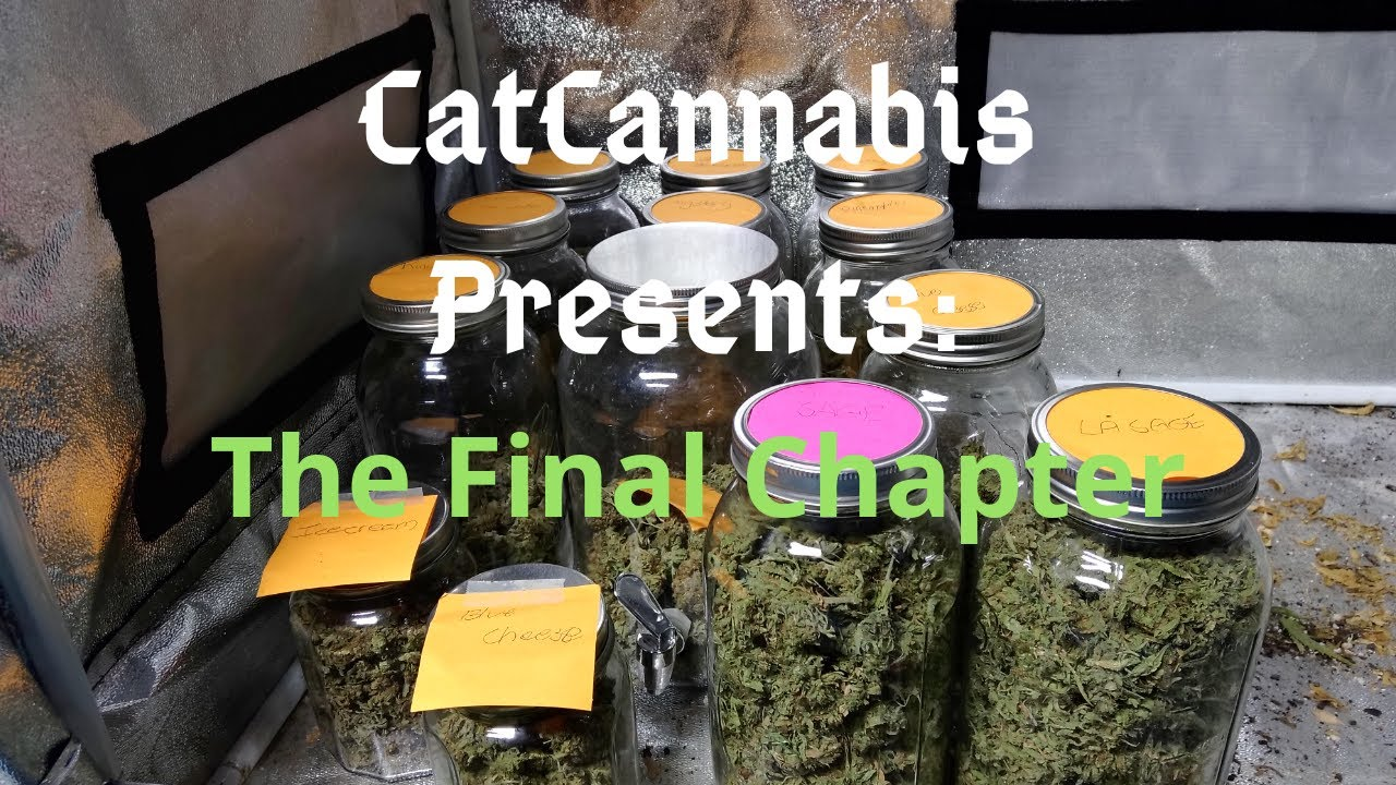 Cannabis Indoor Gardening #17 – Harvest Time! The Final Chapter