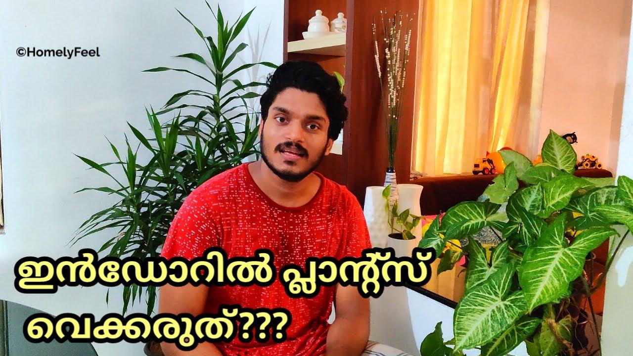 Don't keep plants indoors?? | in Malayalam | Homely Feel | Diyab
