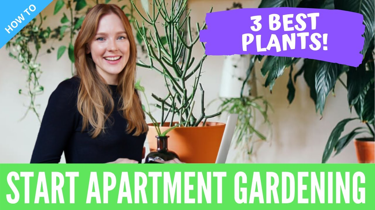 Apartment Gardening for Beginners   Urban Plants to Grow Indoor [Ideas & Tips]