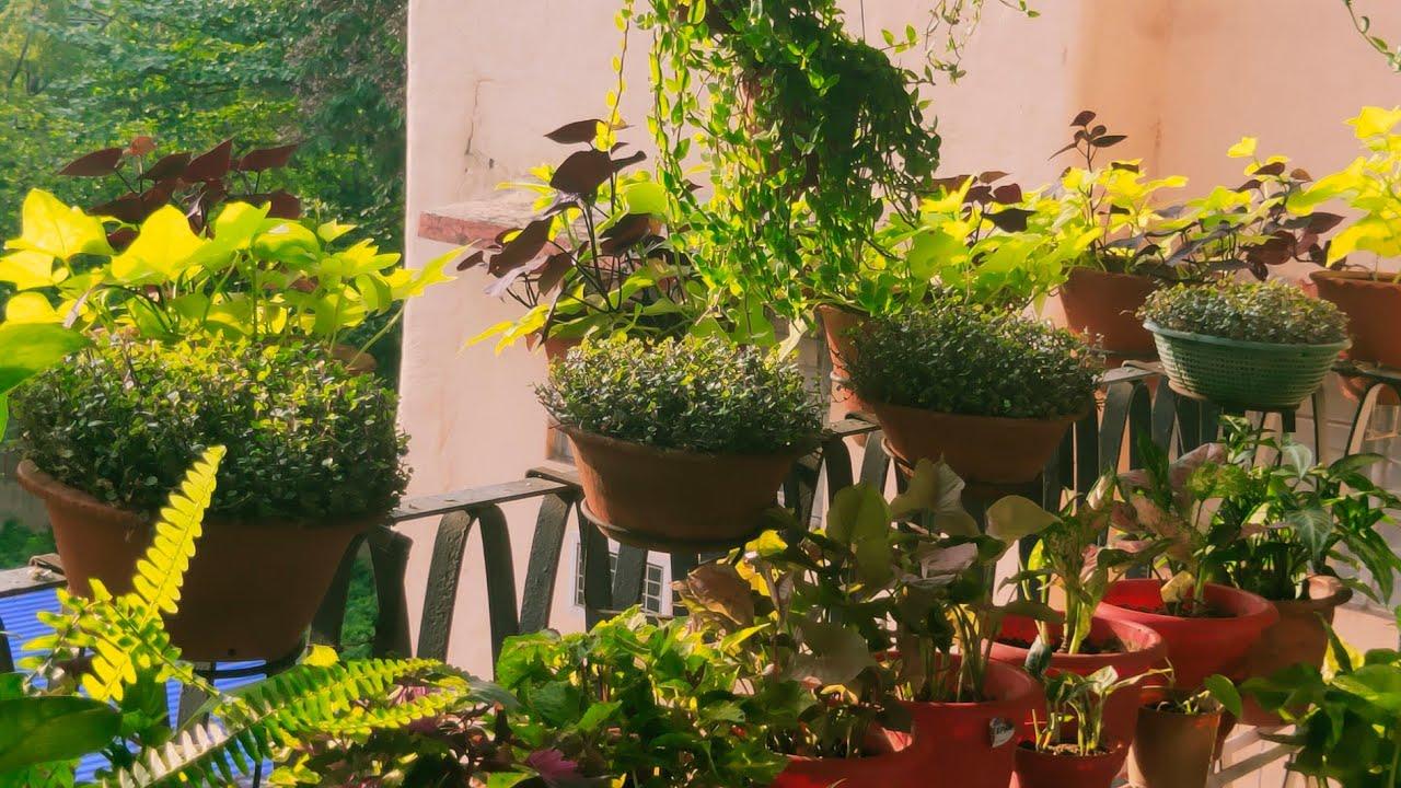 Summer Garden Overview    Balcony Gardening    Indoor gardening during lockdown