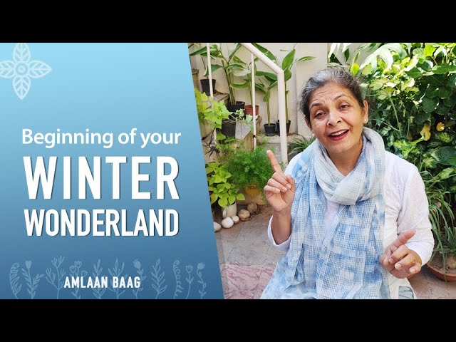 Beginning of Your Winter Wonderland | Flowers & Vegetable Garden Preparation